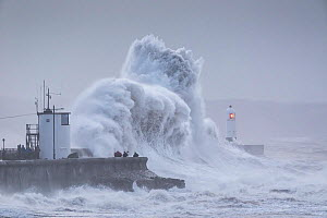 Waves crashing against coast at Porthcawl Lighthouse during Storm Ciara, people storm watching on sea wall. Mid Glamorgan, Wales, UK. February 2020.  -  Guy Edwardes