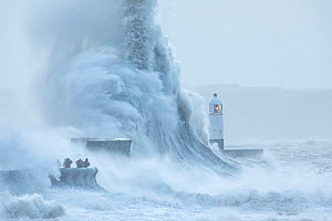 Waves crashing against coast during Storm Ciara, people storm watching on sea wall. Porthcawl Lighthouse, Mid Glamorgan, Wales, UK. February 2020.  -  Guy Edwardes