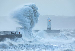 Waves crashing against coast during Storm Ciara, group of people storm watching on sea wall. Porthcawl Lighthouse, Mid Glamorgan, Wales, UK. February 2020.  -  Guy Edwardes