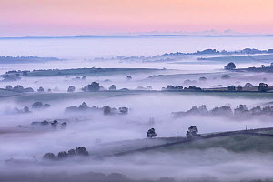 Mist over countryside at dawn, view from Pilsdon Pen. Dorset, England, UK. October 2019.  -  Guy Edwardes