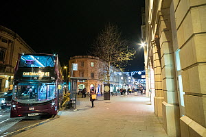Pied Wagtails (Motacilla alba) mass roosting at night in tree, Bath city centre, England, UK, January.  -  John Waters