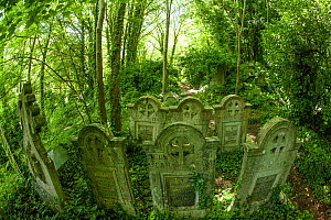 Arnos Vale Cemetery, now disused, overgrown and a refuge for nature. Bristol, England, UK, June 2019,  -  John Waters