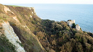 Hooken Undercliff, massive landslip that occured in 1790, now colonised by woodland and scrub, west of Beer, Devon. March 2020,  -  John Waters