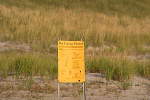Sign warning of restricted access to nesting area of Piping plover (Charadrius melodus) in sand dunes, Nickerson Beach, Long Island, New York, USA, September  -  Marie Read