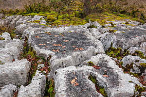 Limestone pavement of Fierloz, Ain, Alps, France, January 2020.  -  Remi Masson