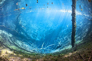 Underwater view of Karst spring, Marais de Lavours Reserve, Ain, Alps, France, November.  -  Remi Masson