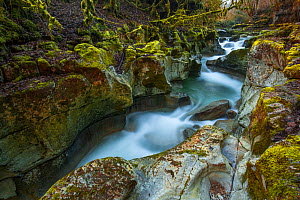 Seran river flowing through the Thurignin Gorge, Ain, Alps, France, January 2020.  -  Remi Masson