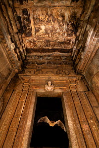Naked-rumped tomb bats (Taphazhopus theobaldi), flying out of Garbhgriha stone carved door of 6th century AD old Shiv temple. Badami , Karanataka, India. Stone carving of Lord Shive and Parvati riding...  -  Yashpal Rathore