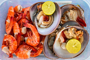 Live chocolate clams and fresh shrimp served with lemon, Puerto San Carlos, a fishing community facing the Pacific Ocean. Magdalena Bay, Baja California, Mexico.  -  Franco Banfi