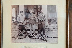 Old photo of Maharaja Brisendra Sing and HH Karuli standing with dead tiger at their feet. Bharatpur India. MAHARAJAH BRISENDRA SING AND HH KARULI STANDING WITH A DEATH TIGER ON THEIR FEET. BHARATPUR,...  -  Patricio Robles Gil