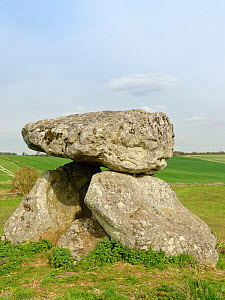 The Devil's Den, the remains of a neolithic burial chamber or dolmen at Fyfield Down National Nature Reserve, the Ridgeway, Marlborough Downs, Wiltshire, UK, April 2019.  -  Nick Upton