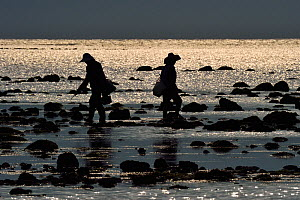 Fishermen on the coast of Land's End spit, the southermost point on the Chinese mainland, Deng Lou Jiao, near Xu Wen, Guangdong province, China November 2015.  -  Staffan Widstrand / Wild Wonders of China