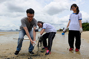 Students cleaning the beach, Horseshoe crab release event oragnized by Ocean Park Conservation Foundation, Hak Pak Nai beach, Yue Long, Hong Kong, China  -  Wayne Wu Ying / Wild Wonders of China