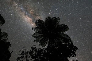 Australian tree fern (Sphaeropteris cooperi) silhouetted against Milky Way in night sky. Queensland, Australia.  -  Jurgen Freund