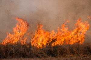 Flames arising from open burning in agricultural field to clear ground before sowing new crop. The burning creates large amounts of black carbon particles and reduces soil fertility. Mareeba, Far Nort...  -  Jurgen Freund