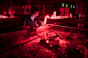 Biologist Dr. Kate Quigley looking at gravid Corals prior to spawning, freshly collected from Great Barrier Reef. Research into spatial and temporal drivers of thermal tolerance in Coral species. Nati...  -  Juergen Freund
