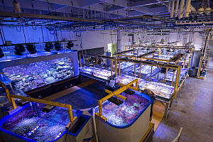 Tanks with Great Barrier Reef experiments at National Sea Simulator. Australian Institute of Marine Science where impacts of complex environmental changes are researched, Cape Ferguson, Queensland, Au...  -  Juergen Freund