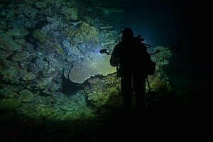 Filmmaker illuminating Coral reef whilst waiting for Corals to spawn. Spawn collected by Coral Larval Restoration / Coral IVF Project to rear Coral and replenish degraded areas of reef. Great Barrier...  -  Juergen Freund