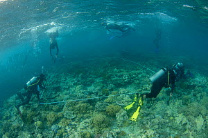 Scientists from Coral IVF team setting up larval distribution plots. Project to rear Coral and replenish degraded sections of Great Barrier Reef, led by Prof. Peter Harrison of Southern Cross Universi...  -  Juergen Freund