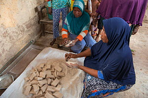 Women grinding sago, a starchy food staple most commonly made from Sago palm (Metroxylon sagu), into flour. West Papua, Indonesia. 2018.  -  Juergen Freund