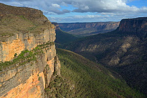 Forested mountains, Blue Mountains National Park, New South Wales, Australia. 2020.  -  Juergen Freund