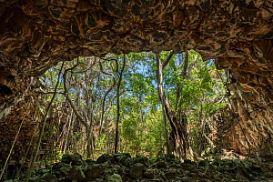 Lava tubes, view out of cave towards forest. Undara Volcanic National Park, Undara is an Aboriginal word translating to 'long way'. Queensland, Australia. 2017.  -  Juergen Freund