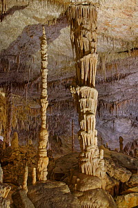 Limestone cave interior with spectacular ornate columns formed by hanging stalactites and rising stalagmites coalescing, Drach caves / Cuevas del Drach, Porto Cristo, Mallorca, August 2018.  -  Nick Upton