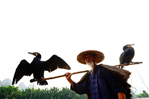 Traditional Chinese fisherman with two domesticated Cormorants (Phalacrocorax carbo sinensis), one drying wings; birdsare used to catch fish. Li River, Yangshuo, Guanxi, China. 2016.  -  Enrique Lopez-Tapia
