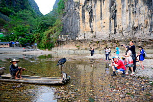 Tourists on riverbank photographing traditional Chinese fisherman with domesticated Cormorant (Phalacrocorax carbo sinensis) used to catch fish, cliff in background. Li River, Yangshuo, Guanxi, China....  -  Enrique Lopez-Tapia