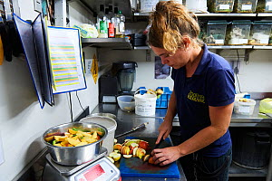 Keeper of the gorilla unit (Gorilla gorilla gorilla) cutting fruit for them in the zoo kitchen, Beauval Zoo, Saint-Aignan, France.  -  Eric Baccega
