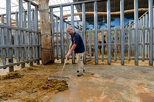 Keeper cleaning the elephant unit, Beauval Zoo, Saint-Aignan, France.  -  Eric Baccega