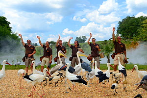 The final of the bird show with pelicans, storks and ibis, Beauval Zoo, Saint-Aignan, France.  -  Eric Baccega