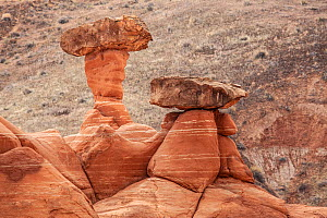 The Toadstools rock formation, Grands Staircase Escalante, Utah, USA, March.  -  Kirkendall-Spring