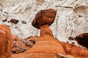 The Toadstool rock formation, Grands Staircase Escalante, Utah, USA, March.  -  Kirkendall-Spring