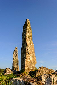 Glengor Standing Stones, Glengorm Estate, Isle of Mull, Scotland, UK. June 2013.  -  Nick Garbutt