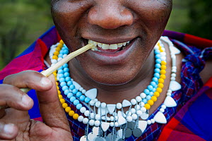 Masaai woman using traditional stick to clean her teeth. Ngorongoro Conservation Area, Serengeti National Park, Tanzania. March 2014.  -  Nick Garbutt