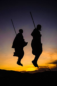 Masaai warriors, two jumping in ceremonial dance, silhouetted at dusk. Ngorongoro Conservation Area, Serengeti National Park, Tanzania. March 2014.  -  Nick Garbutt
