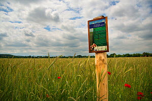 Sign in a field stating that it is a release site for European hamsters (Cricetus cricetus), Limburg, The Netherlands. May.  -  Edwin Giesbers