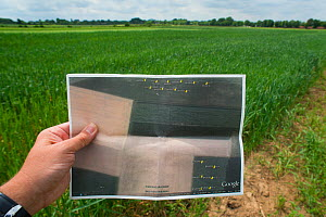 Area map marked with the location of European hamster burrows in a field, Limburg, The Netherlands. May.  -  Edwin Giesbers
