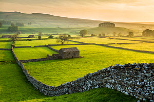Barn amongst network of meadows and drystone walls, on summer morning. Wensleydale, Yorkshire Dales National Park, North Yorkshire, England, UK. May 2014.  -  Guy Edwardes