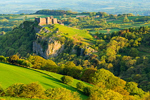 Carreg Cennen Castle on hilltop surrounded by forest, in morning light. Brecon Beacons National Park, Trap, Carmarthenshire, Wales. March 2013.  -  Guy Edwardes