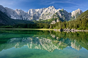 Julian Alps and coniferous forests of Planica valley reflected in lake. Zelenci Springs Nature Reserve, Slovenia. July 2007.  -  Guy Edwardes