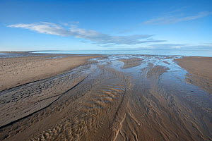 Channels on beach at low tide. Brouwersdam, Zeeland, The Netherlands. November 2019.  -  Bernard Castelein