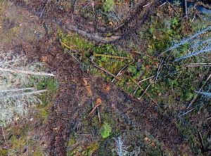 Aerial view of virgin coniferous forest after logging. Ski, Akershus, Norway. Sequence 2/2.  -  Pal Hermansen