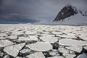 RF - Broken ice in fjord with snow covered mountain. Hornsund, Svalbard, Norway. May 2018. (This image may be licensed either as rights managed or royalty free.)  -  Pal Hermansen