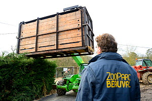 A crate containing a Hippopotamus (Hippopotamus amphibius) being transported into Beauval Zoo, observed by a zookeeper, Saint-Aignan, France.  -  Eric Baccega