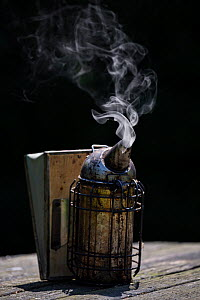 Bee smoker. Important equipment of a beekeeper to calm down Honey bees (Apis Mellifera), Germany  -  Ingo Arndt