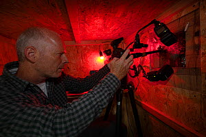Wildlife Photographer Ingo Arndt in his hide taking pictures of the inside of a black woodpecker nest cavity colonized by honeybees (Apis mellifera), Germany  -  Ingo Arndt