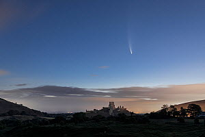 Comet C/2020 F3 Neowise over Corfe Castle , Corfe Common, Isle of Purbeck, Dorset, UK. July 2020  -  Guy Edwardes