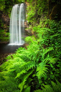Henrhyd Falls and ferns, Brecon Beacons National Park, Powys, Wales, UK, June.  -  Guy Edwardes